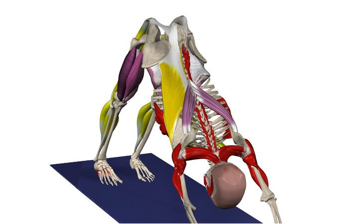 Join Yoga Anatomy Special Workshop